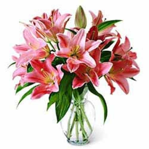 Lily Flowers Send Lilies Flowers To India Lilium Flowers