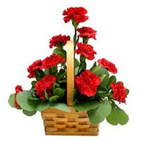 Send Red Carnation Basket 12 Flowers with Rakhi to India