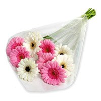 Send Rakhi with Flowers to Jaipur. Pink White Gerbera Bouquet 12 Flowers in India