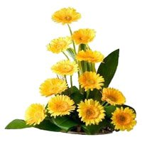 Online Delivery of Rakhi with Yellow Gerbera Basket 12 Flowers