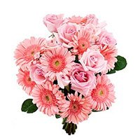 Send Rakhi with Pink Gerbera Roses Bouquet to India