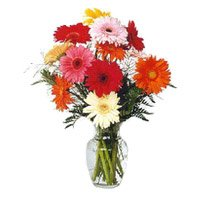 Deliver Blue Mixed Gerbera Vase 12 Flowers  with Rakhi to India