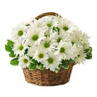 Rakhi with White Gerbera Flower Delivery to India