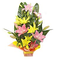 Pink Yellow Lily Basket 6 Flower Stems with Rakhi in India Online