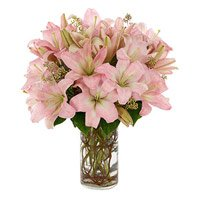 Online Rakhi and Pink Lily Flowers delivery in India