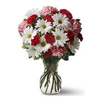 Mix Gerbera Carnation in Vase 24 Flowers with 2 Free Rakhi Delivery in India on Rakhi